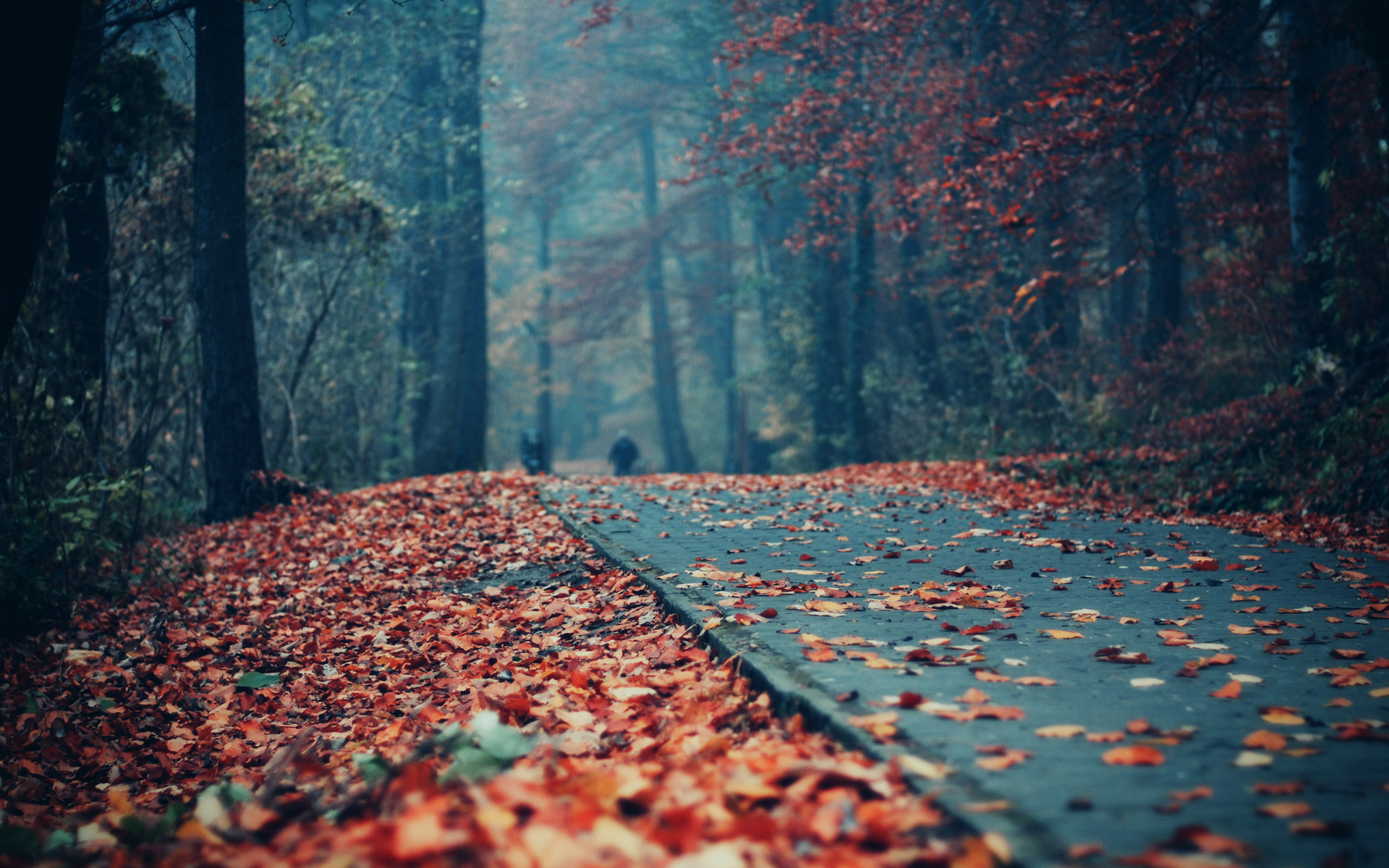 road_deck_autumn_leaves